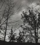 Untitled [Trees]; Keiper, Elisabeth; ca. 1940s; 1978:0117:0002