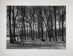 Mendon Ponds Park, Apr 1980; Bretz, Robert L.; 1980; 1980:0221:0001