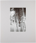 Trees; DeLory, Peter; March 1971; 1978:0162:0007