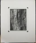 Untitled [Tree bark.]; Enos, Franklin; ca. early 1970s; 1972:0082:0001