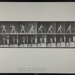 Lawn tennis; serving. [M. 294]; Da Capo Press; Muybridge, Eadweard; 1887; 1972:0288:0071