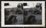 Untitled [Dylan with woman in background]; Fichter, Robert; ca. 1968; 2000:0061:0016