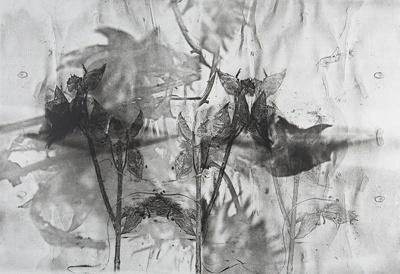 Untitled [Flowers]; Lyons, Joan; ca. 1970s; 1987:0090:0013