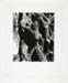 Olive Tree, Corfu; Siskind, Aaron; 1970; 1973:0049:0001