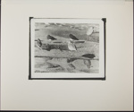 Untitled [Five birds on the beach.]; Enos, Franklin; ca. early 1970s; 1972:0065:0001