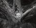 Split Tree With Rocks; DiBiase, Michael; 1967; 1982:0092:0001