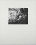 Untitled [Tree on side of hill]; DeGabriel, Dale; 1972; 1974:0003:0001