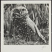 Untitled [Burrowing owl]; Enos, Franklin; ca. early 1970s; 1976:0001:0003