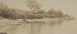 Untitled [Tree lined coast]; Lamson Studio; Undated; 1986:0036:0009