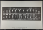 Lifting and holding two 50-lb. dumb-bells. [M. 325]; Da Capo Press; Muybridge, Eadweard; 1887; 1972:0288:0085