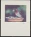 Purple Finch; Enos, Franklin; ca. early 1970s; 1976:0001:0002