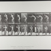 Base-ball; catching and throwing. [M. 281]; Da Capo Press; Muybridge, Eadweard; 1887; 1972:0288:0058