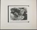 Untitled [Birds standing in feeder.]; Enos, Franklin; March 31, 1972; 1972:0072:0001