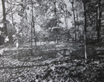 Untitled [Dog in woods]; Toth, Carl; ca. 1974; 1976:0042:0007