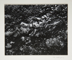 [Untitled, Abstraction of natural forms]; Wells, Alice; ca. 1965; 1972:0287:0170