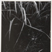 [Untitled, Image of plant material]; Wells, Alice; ca. 1962; 1972:0287:0140