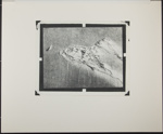 Untitled [Beach grass and feather.]; Enos, Franklin; 1970; 1972:0067:0001