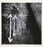 [Untitled, abstraction of a natural form]; Wells, Alice; ca. 1965; 1972:0287:0056