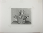 Untitled [Potted succulent plant.]; Enos, Franklin; 1972; 1972:0069:0001