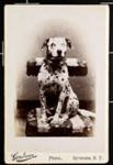 [Goodwin Dalmatian]; Goodwin Studios; 1977:0036:0063
