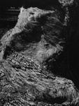 Untitled [Tree trunk]; Colwell, Larry; ca. 1950s; 1974:0040:0005