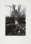 Untitled [Tree]; Brese, Denis; 1973; 1973:0061:0009