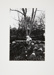 Untitled [Tree]; Brese, Denis; 1973; 1973:0061:0009