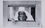 The Masks Split Us; Laughlin, Clarence John; 1948; 2011:0019:0004