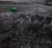 A Green Cow; Jones, Harold; 1968; 1973:0014:0001