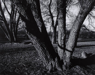 Untitled [Trees]; Buld, John; 1971:0539:0001