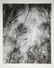[Untitled, Blurred image of tree tops]; Wells, Alice; ca. 1962; 1972:0287:0164