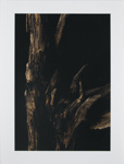 Untitled [Trunk and branches]; Larson, Nate; undated; 2011:0015:0003