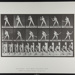 Base-ball; batting (low ball). [M. 275]; Muybridge, Eadweard; 1887; 1972:0288:0052