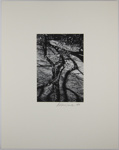 Untitled [Blossoms]; Smith, Debbie; 1974; 1978:0129:0008