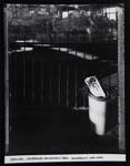 Carousel, Seabreeze Amusement Park ; Stone, Jim; August 1985; 1986:0013:0016