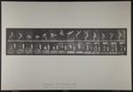 Back somersault. [M. 362]; Da Capo Press; Muybridge, Eadweard; 1887; 1972:0288:0095