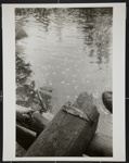 [Trout on a piece of wood by the water]; Carter, Joe; 1974; 1984:0009:0001