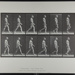 Walking. [M. 6]; Da Copa Press; Muybridge, Eadweard; 1887; 1972:0288:0005