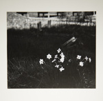 [Untitled, image of flowers in graveyard]; Wells, Alice; ca. 1965; 1972:0287:0151