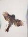 Dead Bird; Sheridan, Sonia Landy; 1972; 1981:0039:0020