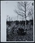Pasternak; Capa, Cornell; 1958; 1984:0027:0001