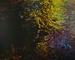 Brook In Spring; Hyde, Scott; 1978; 2000:0075:0001