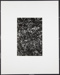 Untitled [medium view of wilted plants]; Beitzell, Neil; ca. 1970; 1971:0353:0001