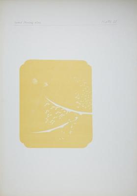 Plate III; Audsley, George; 1883; 1978:0125:0004