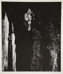[Untitled, Abstraction of natural forms]; Wells, Alice; ca. 1962; 1972:0287:0148