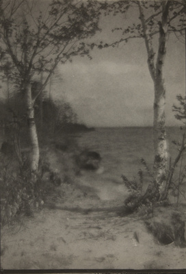 Untitled [Trees by the shore]; Bland, William; undated; 1974:0056:0008