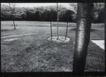 Tree, Route #17, N.Y.; Mertin, Roger; 1973; 1976:0019:0001