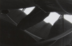 Untitled [Leaves]; Mertin, Roger; undated; 1998:0005:0051