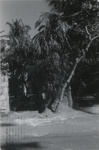Untitled [Trees near water]; Dane, Bill; ca. 1975; 2011:0014:0039