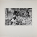 [Man walking in front of stone wall with dog on it]; Christian, John; 1969; 1982:0075:0003